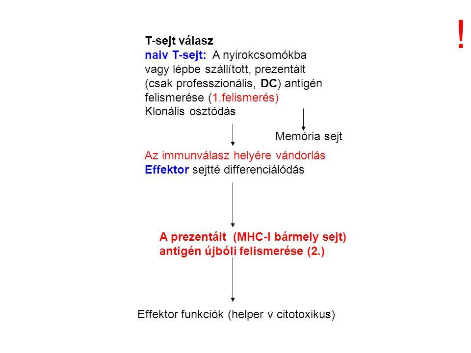 ! T-sejt válasz. naiv T-sejt: A nyirokcsomókba vagy lépbe szállított, prezentált (csak professzionális, DC) antigén felismerése (1.felismerés)