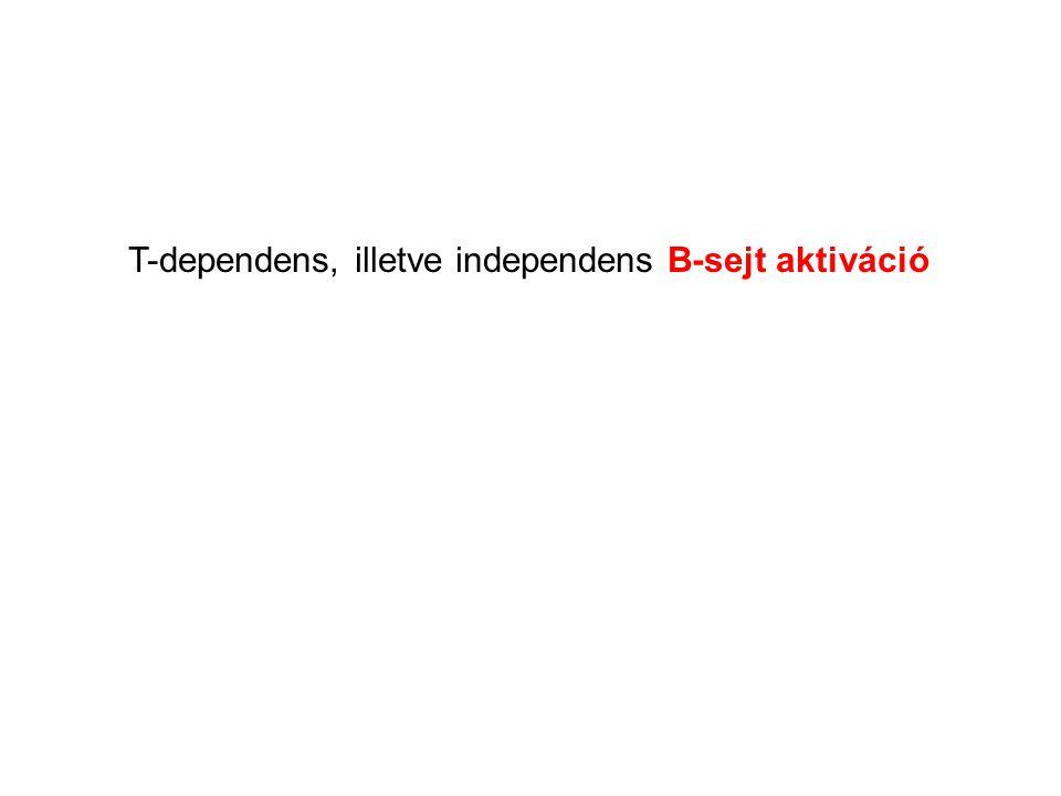T-dependens, illetve independens B-sejt aktiváció