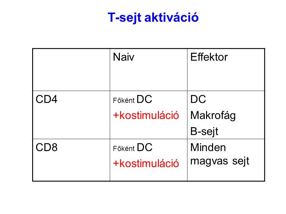T-sejt aktiváció Naiv Effektor CD4 +kostimuláció DC Makrofág B-sejt