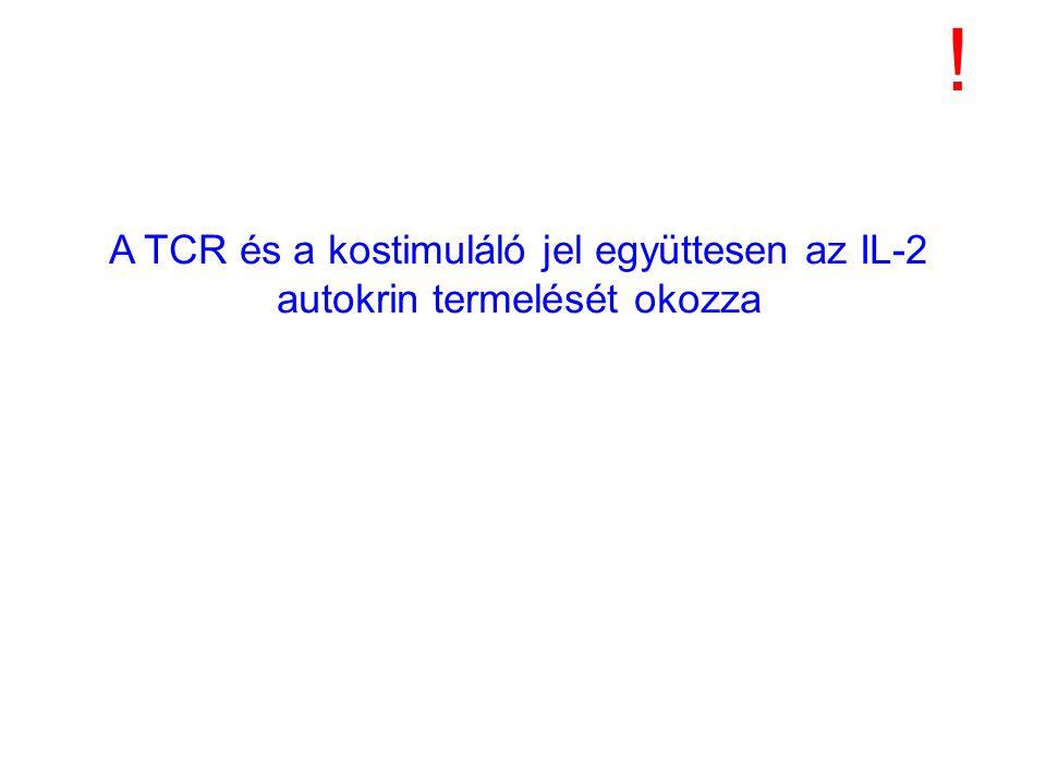 ! A TCR és a kostimuláló jel együttesen az IL-2 autokrin termelését okozza