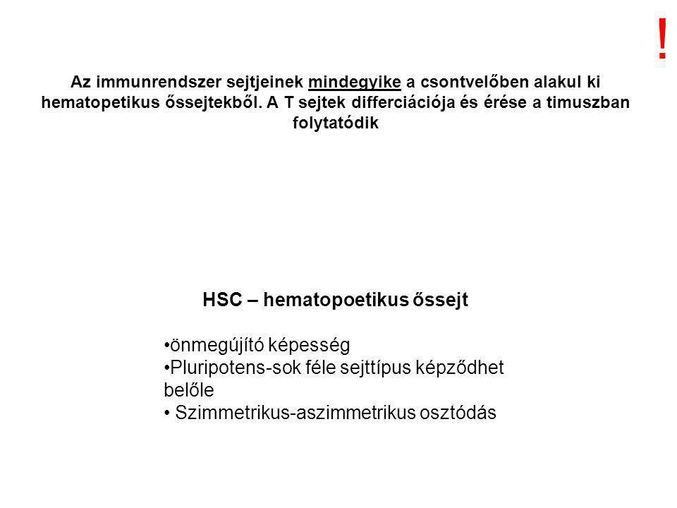 HSC – hematopoetikus őssejt