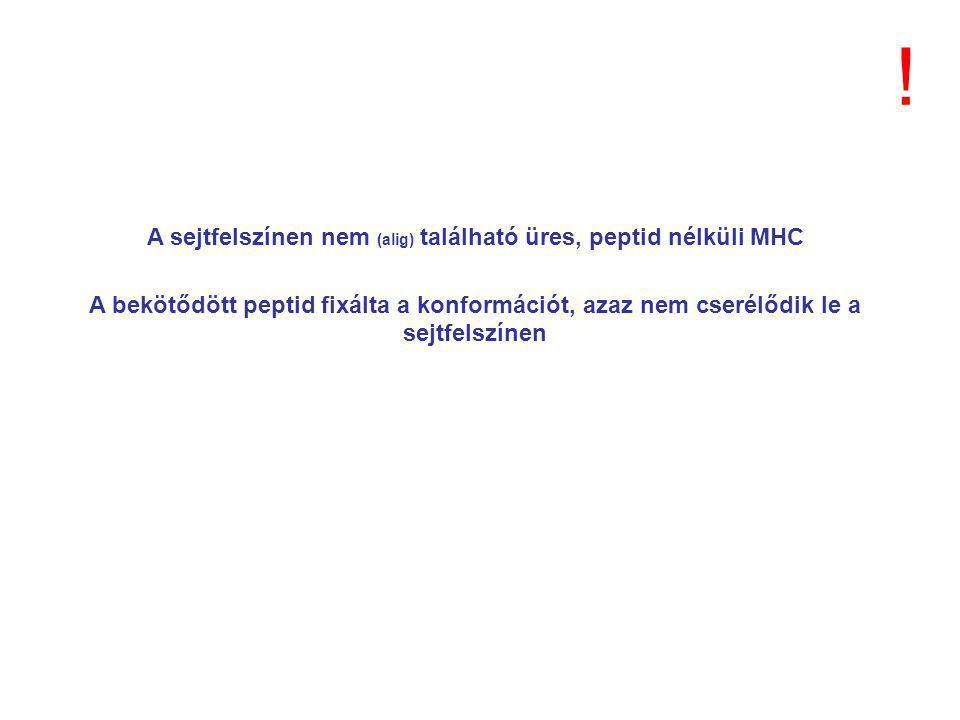 A sejtfelszínen nem (alig) található üres, peptid nélküli MHC