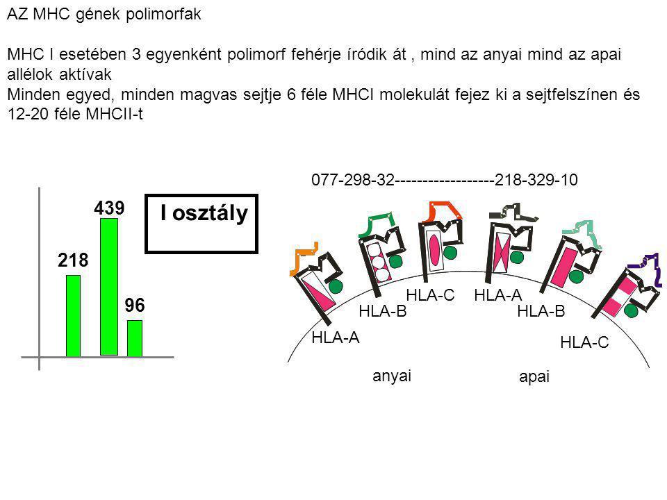 I osztály 439 218 96 AZ MHC gének polimorfak