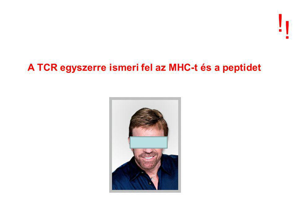 ! ! A TCR egyszerre ismeri fel az MHC-t és a peptidet