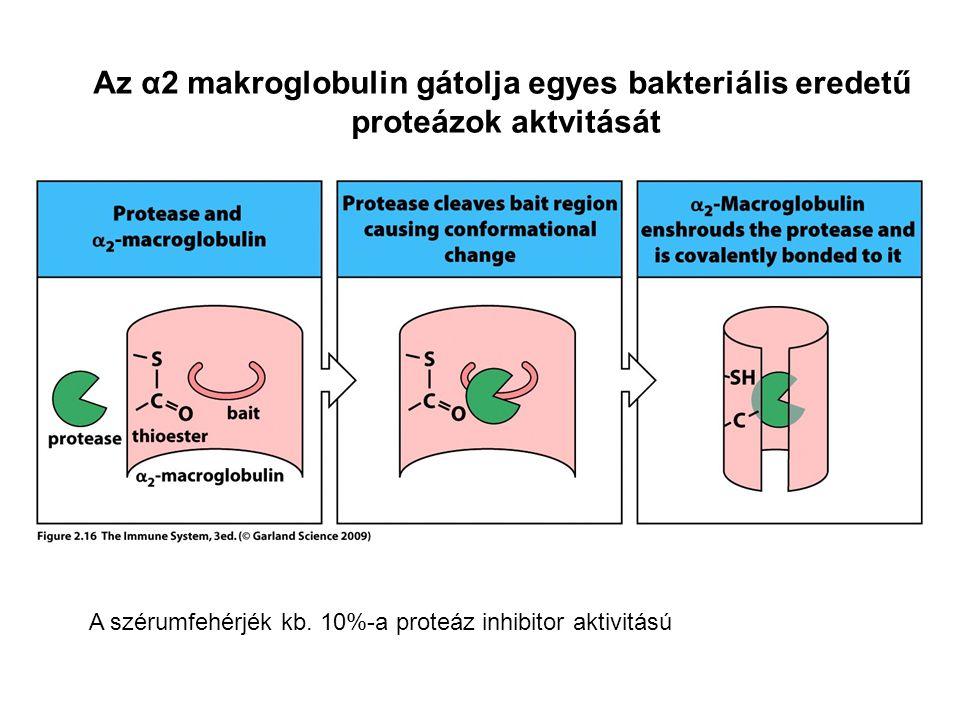 Az α2 makroglobulin gátolja egyes bakteriális eredetű