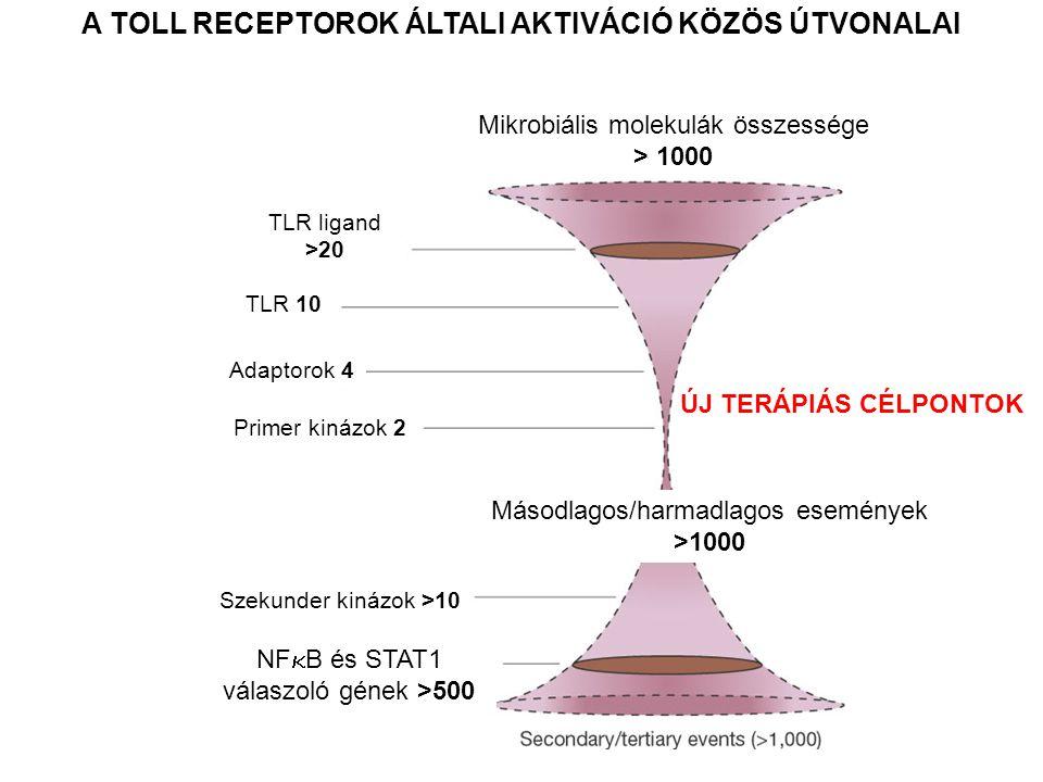 A TOLL RECEPTOROK ÁLTALI AKTIVÁCIÓ KÖZÖS ÚTVONALAI