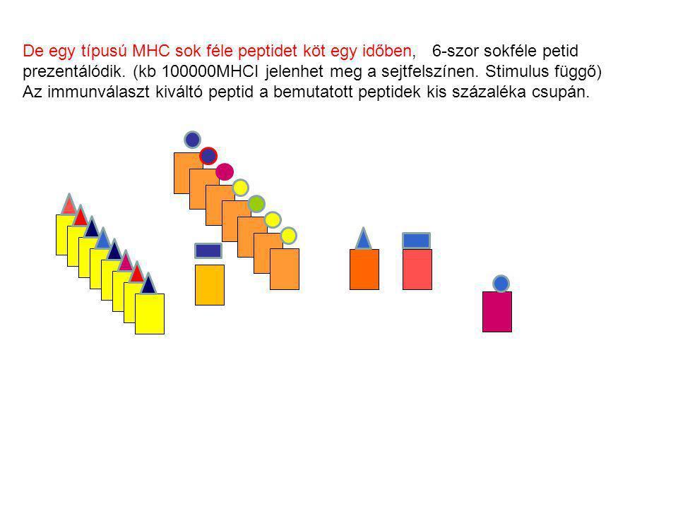 De egy típusú MHC sok féle peptidet köt egy időben, 6-szor sokféle petid prezentálódik. (kb 100000MHCI jelenhet meg a sejtfelszínen. Stimulus függő)