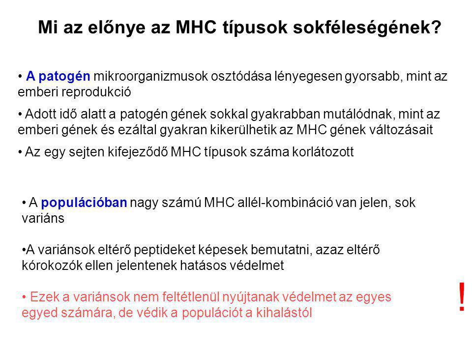Mi az előnye az MHC típusok sokféleségének