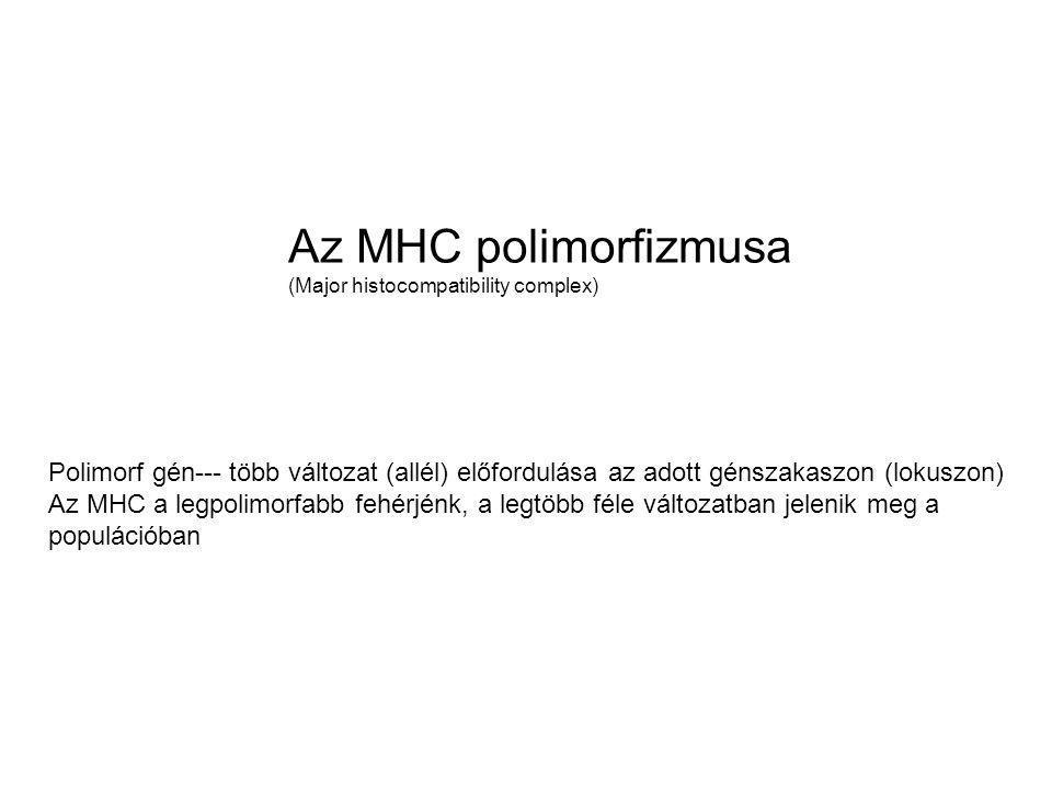 Az MHC polimorfizmusa (Major histocompatibility complex) Polimorf gén--- több változat (allél) előfordulása az adott génszakaszon (lokuszon)