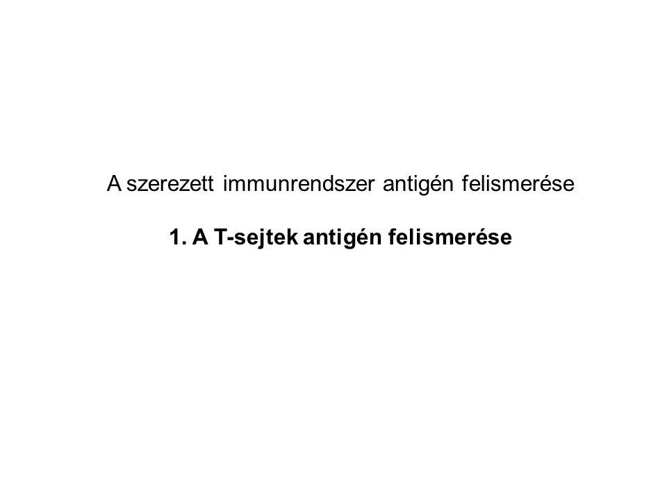 1. A T-sejtek antigén felismerése