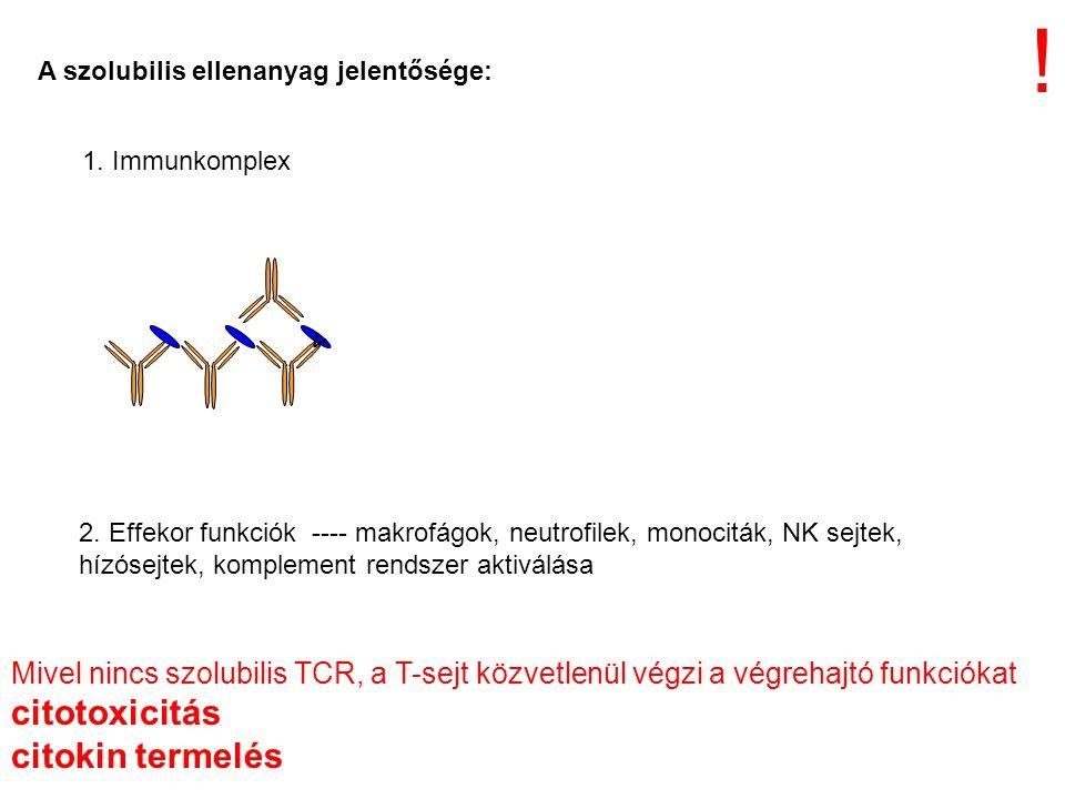 ! citotoxicitás citokin termelés