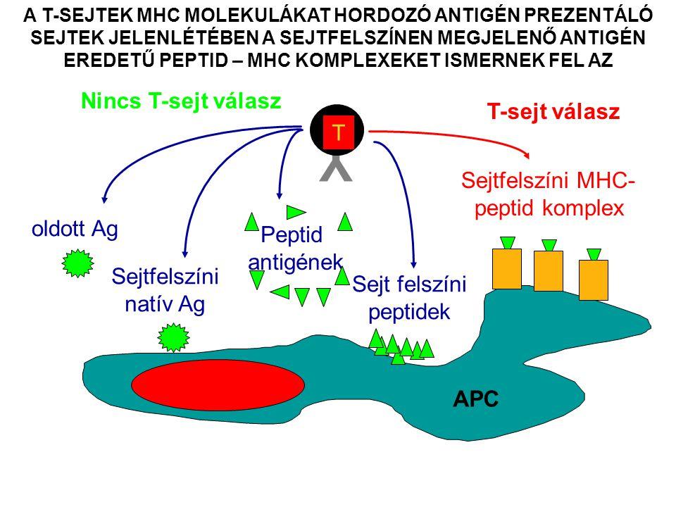 Sejtfelszíni MHC-peptid komplex