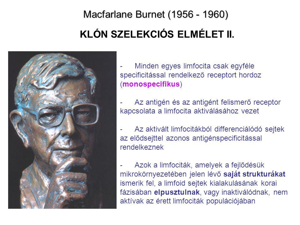 Macfarlane Burnet (1956 - 1960) KLÓN SZELEKCIÓS ELMÉLET II.