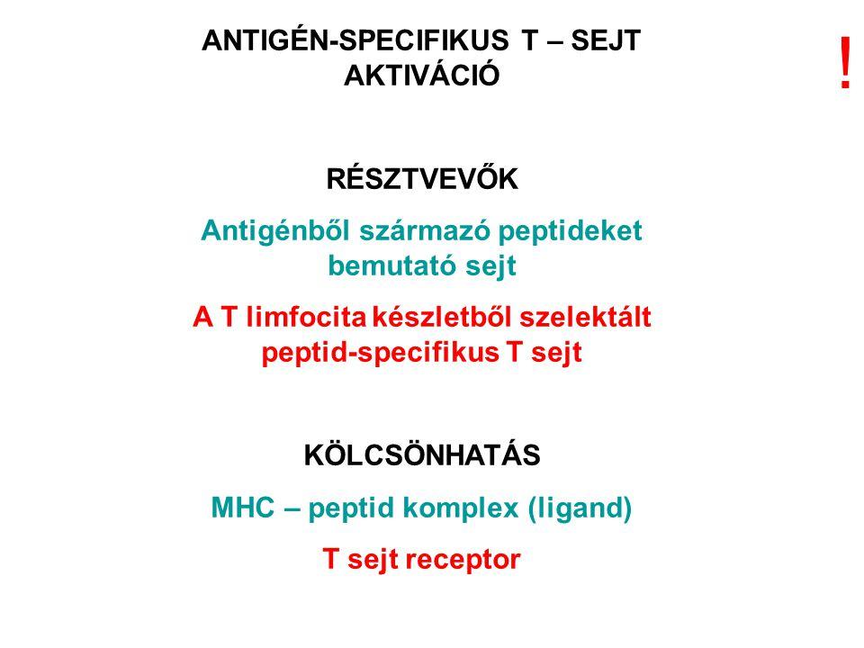 ! ANTIGÉN-SPECIFIKUS T – SEJT AKTIVÁCIÓ RÉSZTVEVŐK