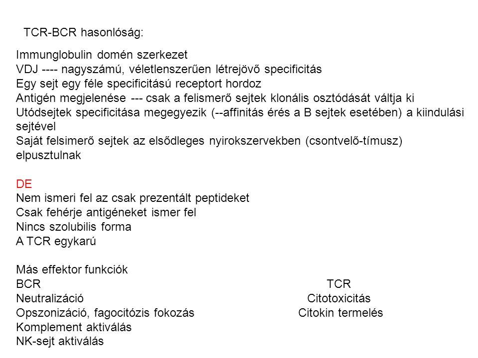 TCR-BCR hasonlóság: Immunglobulin domén szerkezet. VDJ ---- nagyszámú, véletlenszerűen létrejövő specificitás.