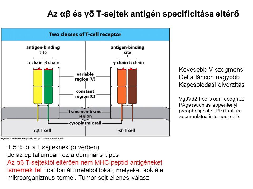 Az αβ és γδ T-sejtek antigén specificitása eltérő