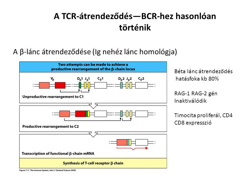 A TCR-átrendeződés—BCR-hez hasonlóan