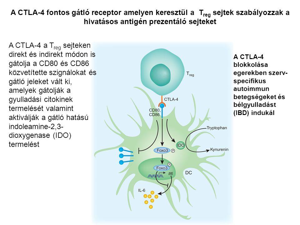 A CTLA-4 fontos gátló receptor amelyen keresztül a Treg sejtek szabályozzak a hivatásos antigén prezentáló sejteket