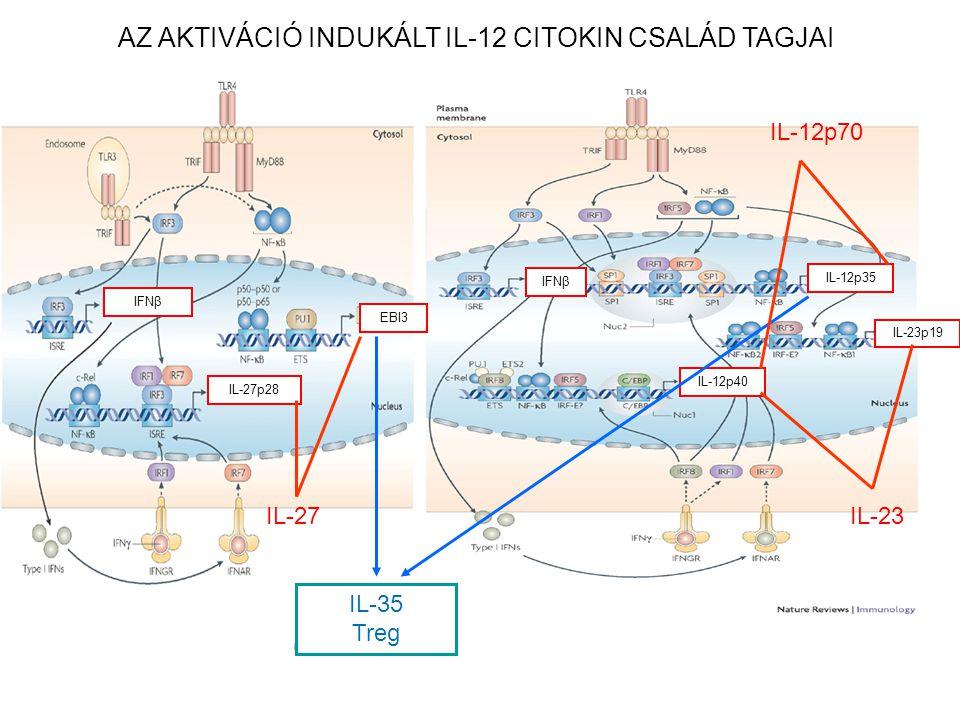 AZ AKTIVÁCIÓ INDUKÁLT IL-12 CITOKIN CSALÁD TAGJAI