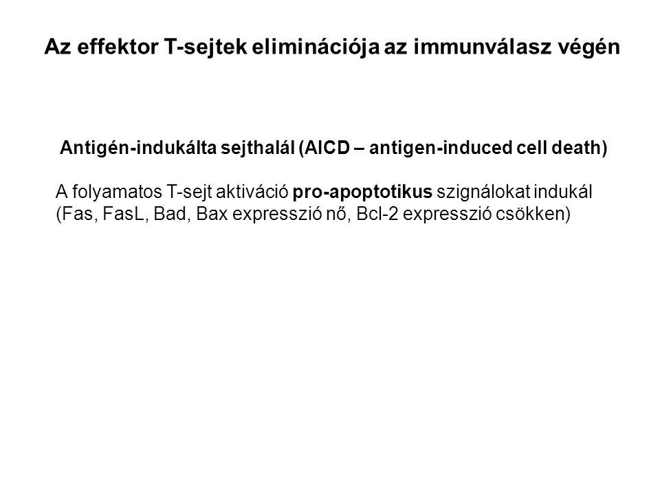 Az effektor T-sejtek eliminációja az immunválasz végén