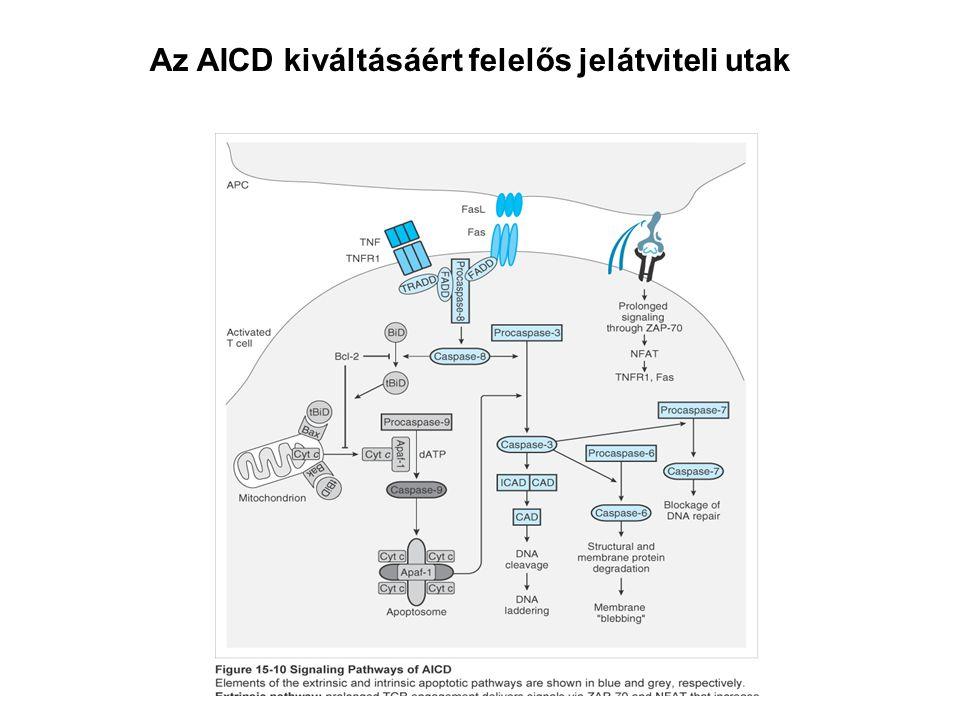Az AICD kiváltásáért felelős jelátviteli utak