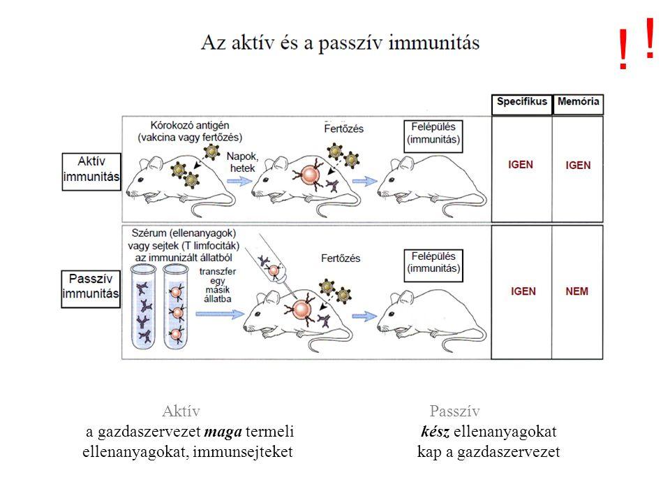 ! ! Passzív immunizálás I. Aktív Passzív