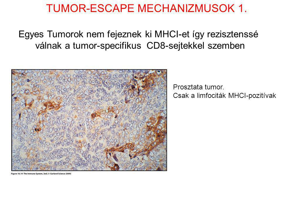 TUMOR-ESCAPE MECHANIZMUSOK 1.