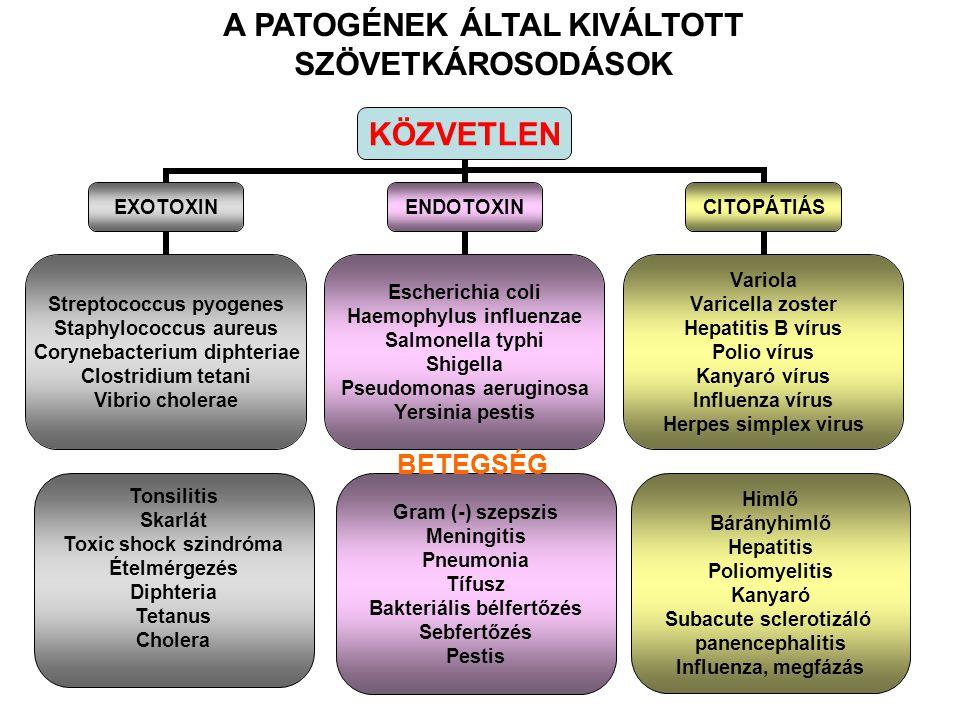 A PATOGÉNEK ÁLTAL KIVÁLTOTT SZÖVETKÁROSODÁSOK