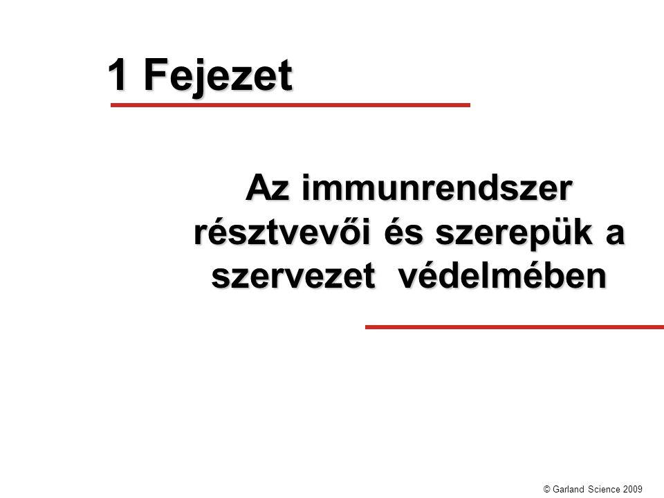 Az immunrendszer résztvevői és szerepük a szervezet védelmében