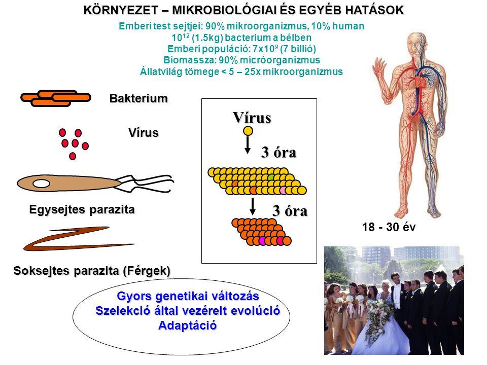 Vírus 3 óra KÖRNYEZET – MIKROBIOLÓGIAI ÉS EGYÉB HATÁSOK Bakterium