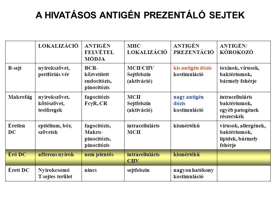 A HIVATÁSOS ANTIGÉN PREZENTÁLÓ SEJTEK