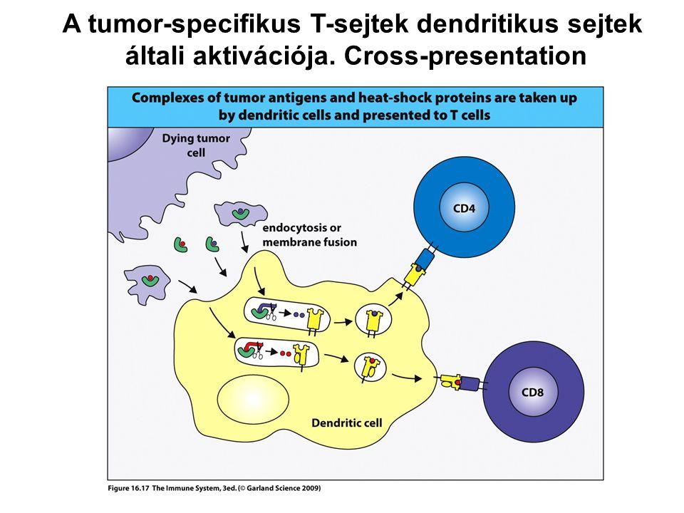 A tumor-specifikus T-sejtek dendritikus sejtek