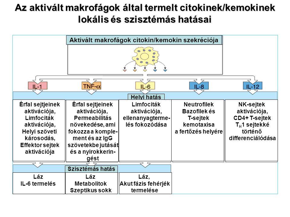 Az aktivált makrofágok által termelt citokinek/kemokinek