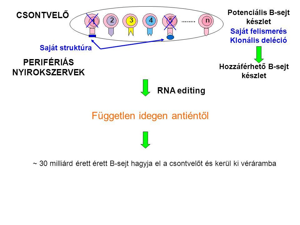 Független idegen antiéntől
