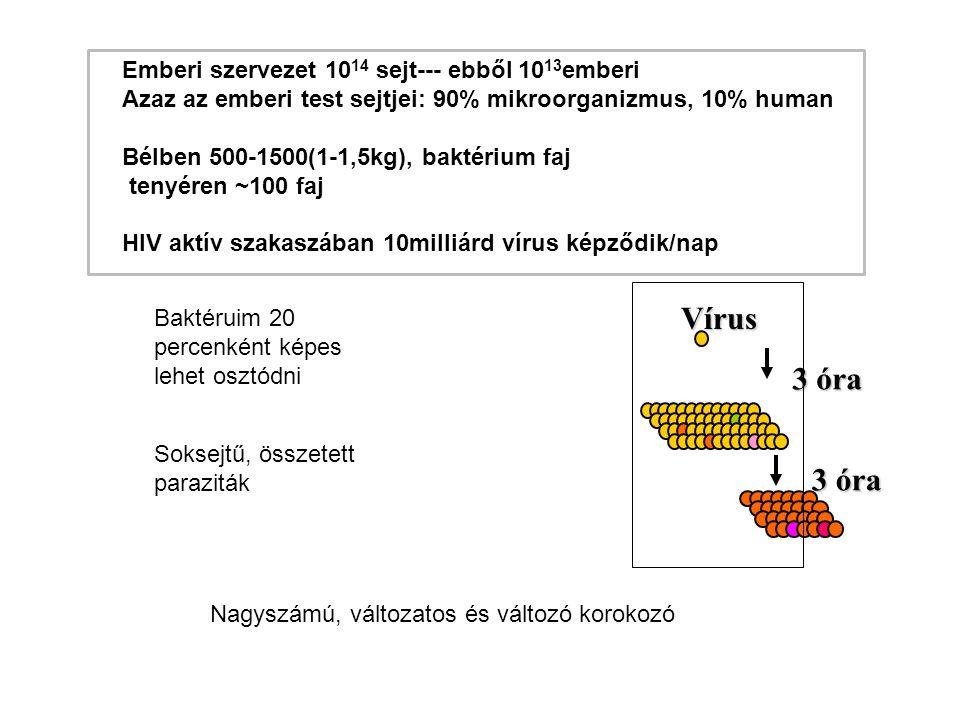 Vírus 3 óra Emberi szervezet 1014 sejt--- ebből 1013emberi