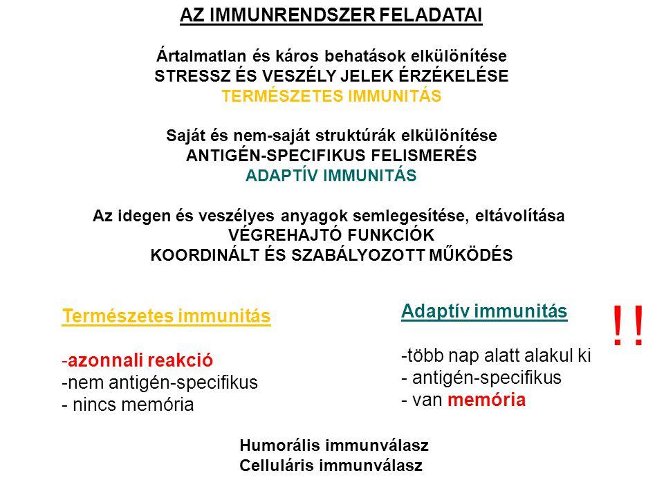 ! ! AZ IMMUNRENDSZER FELADATAI Adaptív immunitás Természetes immunitás