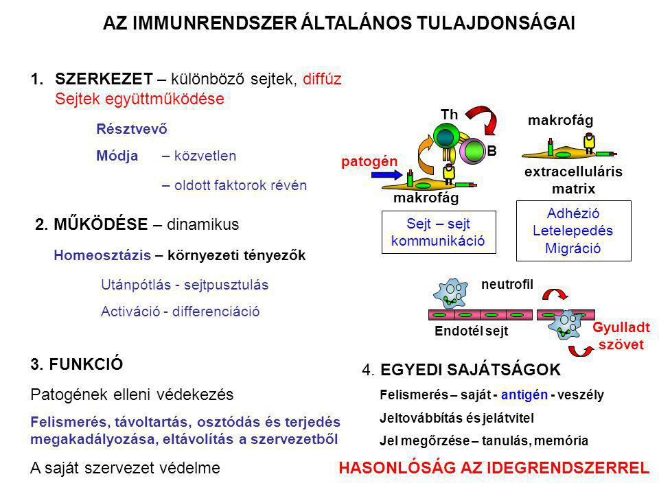 AZ IMMUNRENDSZER ÁLTALÁNOS TULAJDONSÁGAI extracelluláris matrix