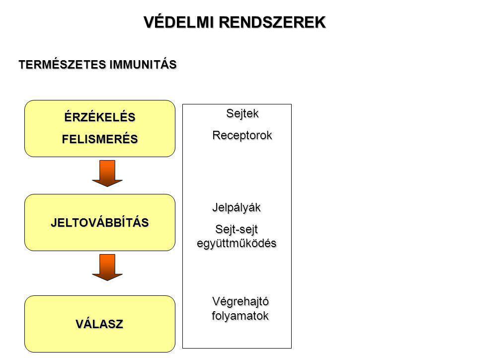VÉDELMI RENDSZEREK TERMÉSZETES IMMUNITÁS Sejtek ÉRZÉKELÉS Receptorok