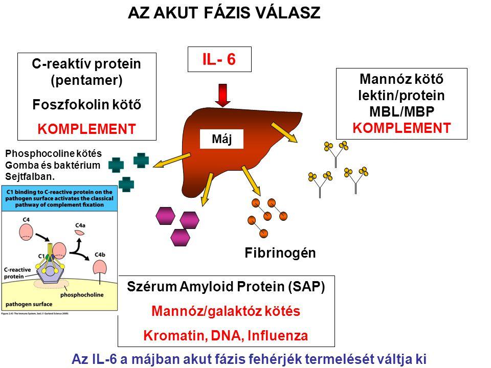 C-reaktív protein (pentamer)