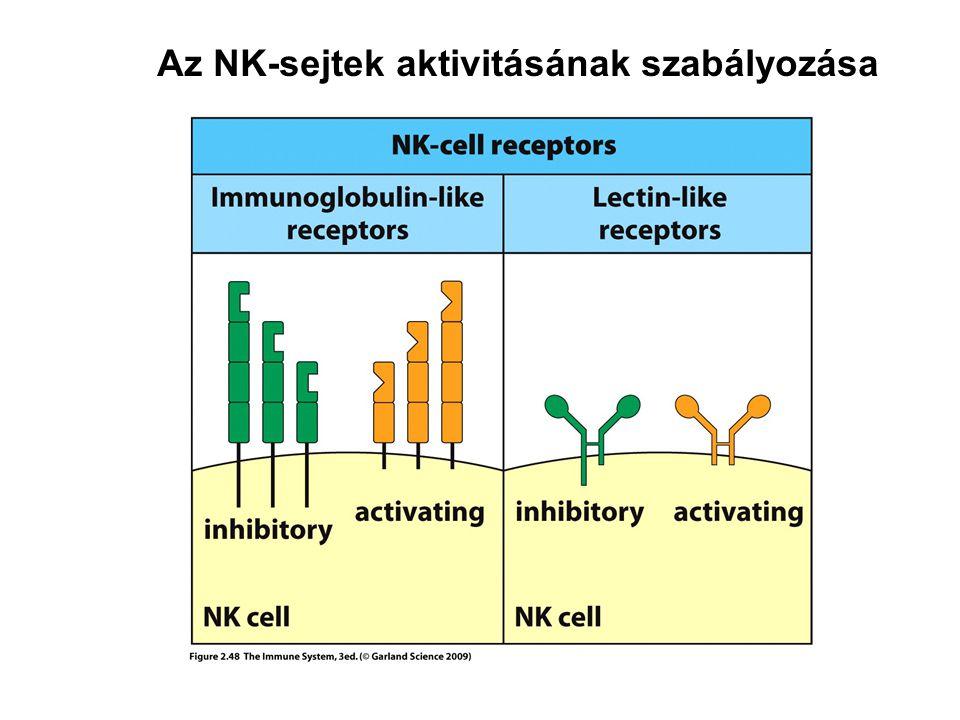 Az NK-sejtek aktivitásának szabályozása