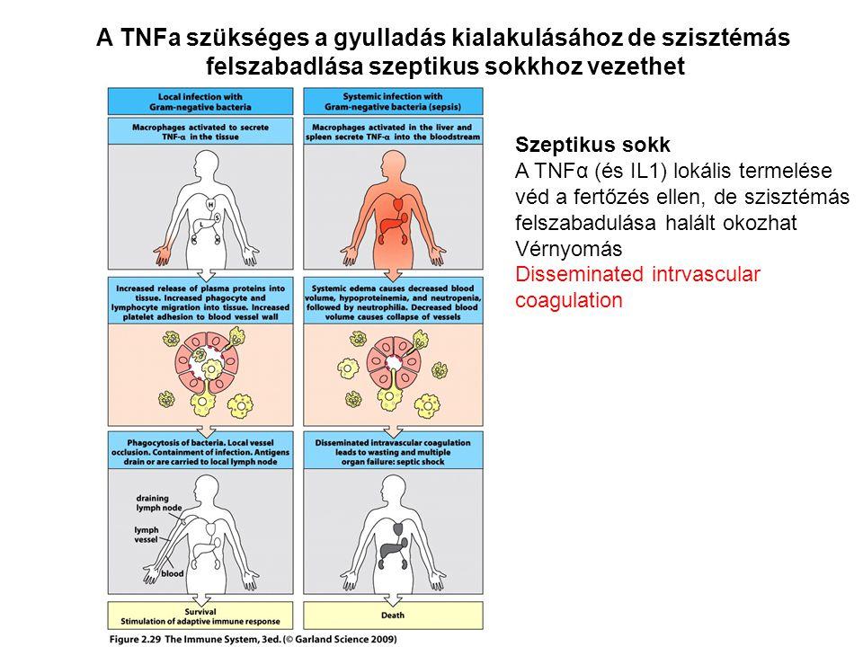 A TNFa szükséges a gyulladás kialakulásához de szisztémás