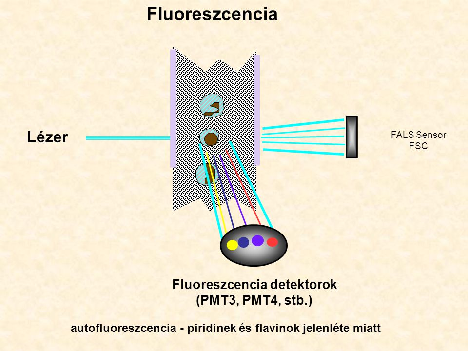 Fluoreszcencia detektorok