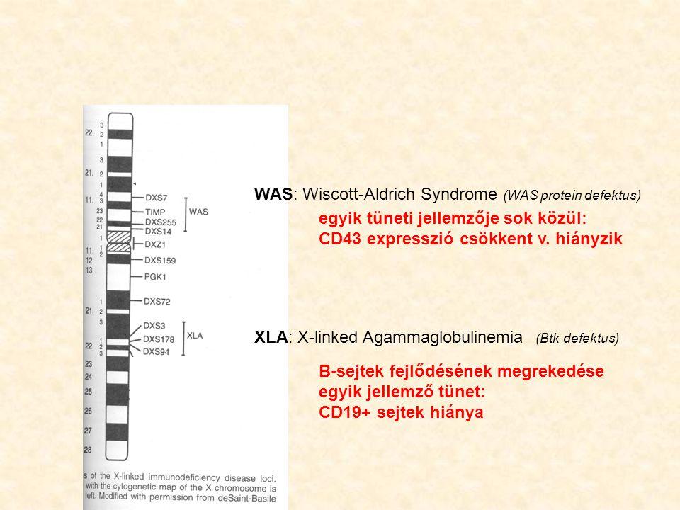 WAS: Wiscott-Aldrich Syndrome (WAS protein defektus)