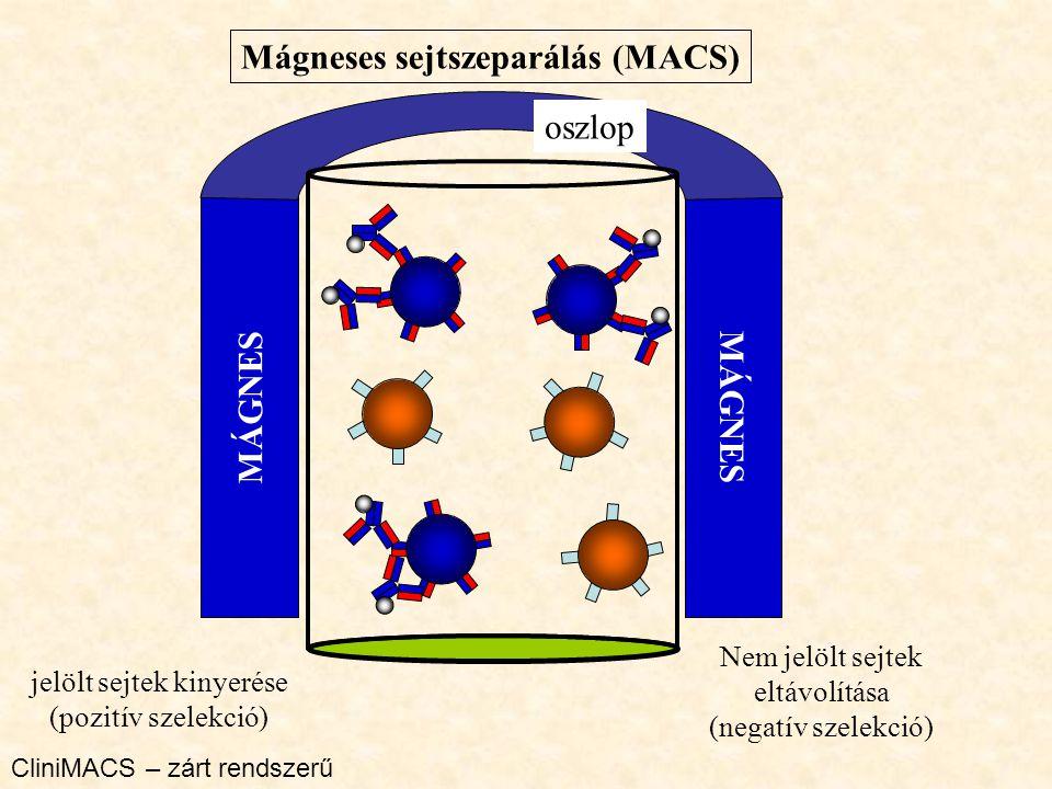 Mágneses sejtszeparálás (MACS)