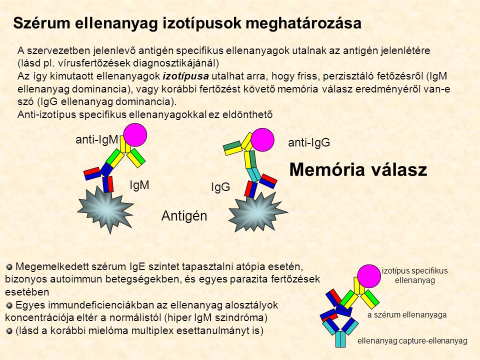 izotípus specifikus ellenanyag