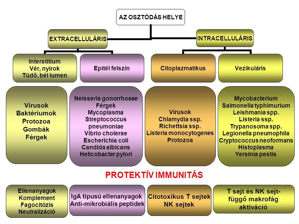 PROTEKTÍV IMMUNITÁS Vírusok Baktériumok Protozoa Gombák Férgek
