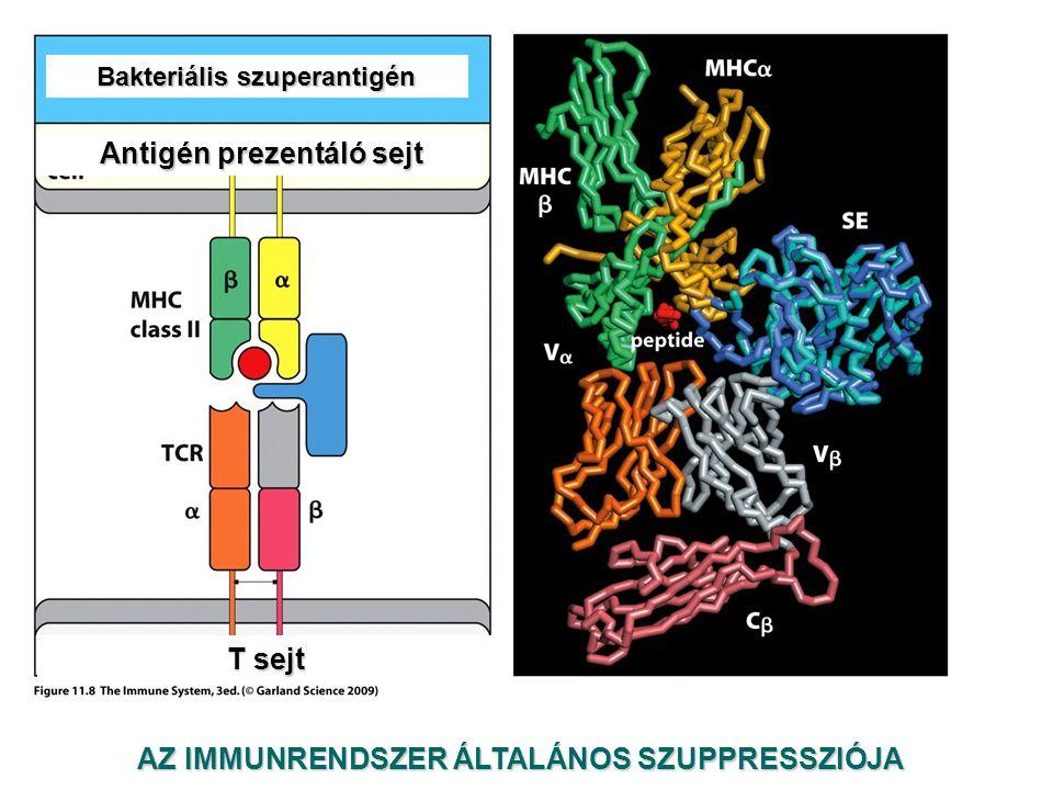 Antigén prezentáló sejt