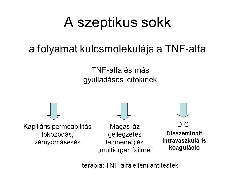 A szeptikus sokk a folyamat kulcsmolekulája a TNF-alfa