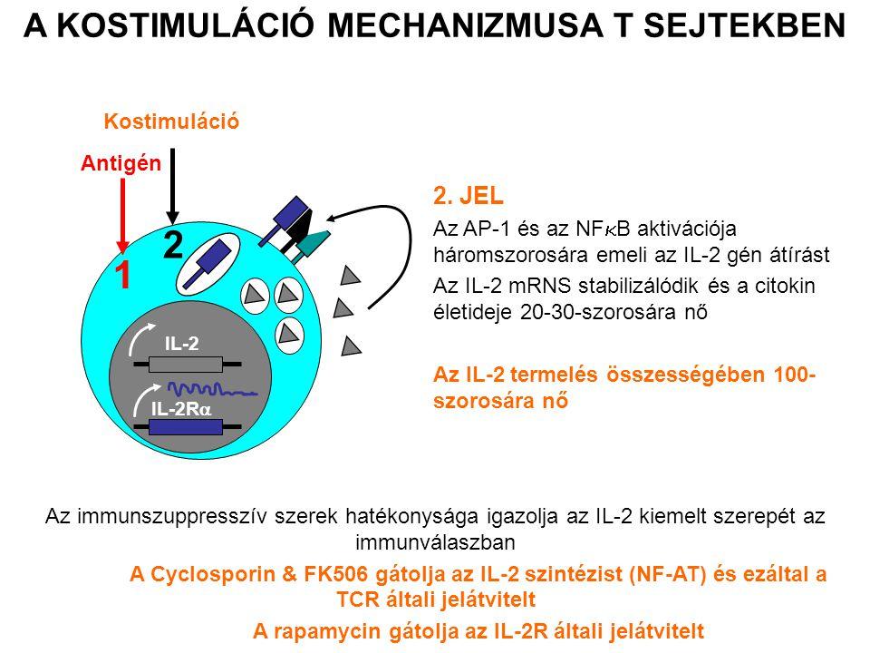 2 1 A KOSTIMULÁCIÓ MECHANIZMUSA T SEJTEKBEN 2. JEL Kostimuláció