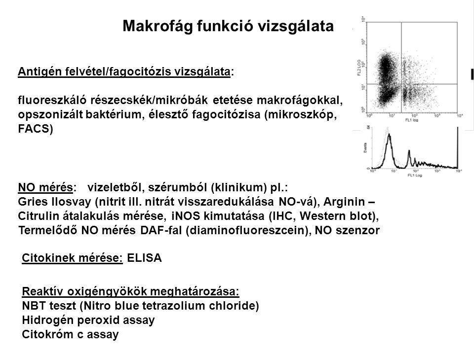 Makrofág funkció vizsgálata